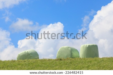 The white plastic wrapped round hay bales (silage) with clear blue sky background, countryside in New Zealand.