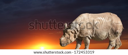 The white rhinoceros or square-lipped rhinoceros (Ceratotherium simum) is the largest and most numerous species of rhinoceros that exists - stock photo