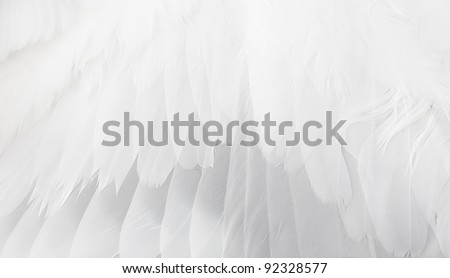 The white wing close up. - stock photo