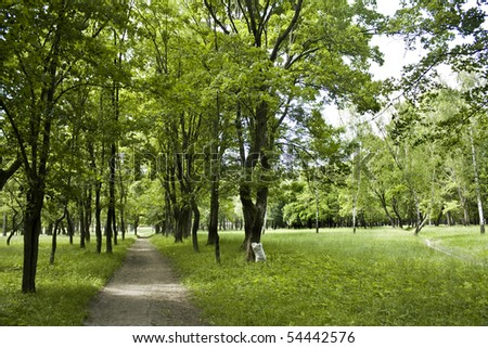 The wide path in green summer forest