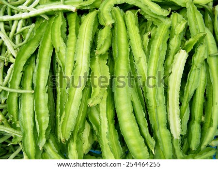 The winged bean (Psophocarpus tetragonolobus), also known as the Goa bean, asparagus pea, four-angled bean, four-cornered bean, Manila bean, Mauritius bean, and winged pea, is a tropical legume plant. - stock photo