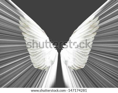 the wings on a black background - stock photo