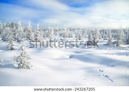 the  winter landscape with the forest  and traces of a hare on snow - stock photo