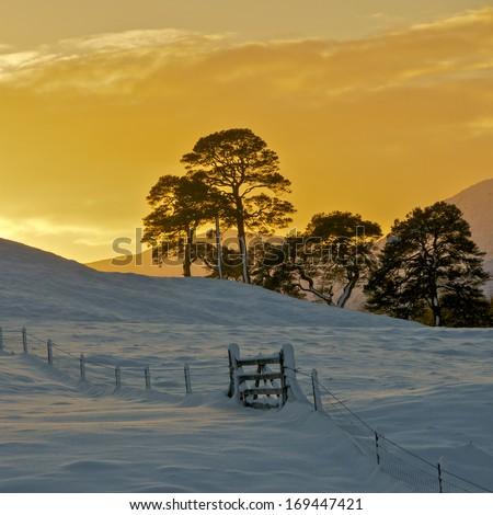 The winter sun setting over snowy fields close to Beinn a Chroin, Crainlarich Scotland - stock photo