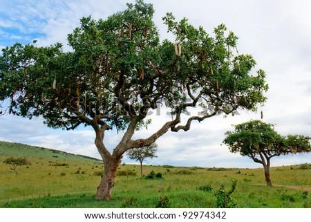 The Wisp Tree - stock photo