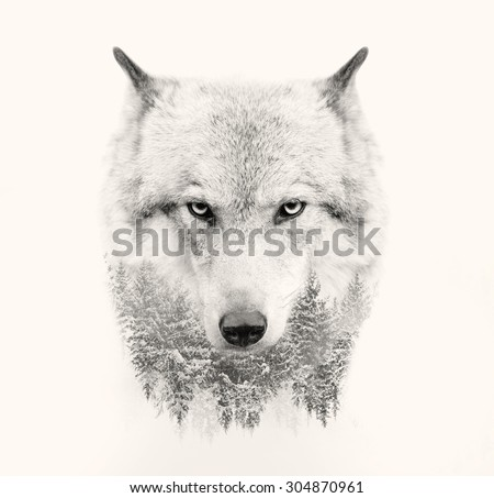 The wolf face on white background double exposure