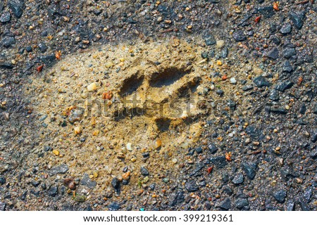 The Wolf Track in a muddy ground. Natural background from wilderness. - stock photo