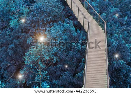 The wooden bridge with blue forest and light for picture background, wallpaper or decoration paper. - stock photo
