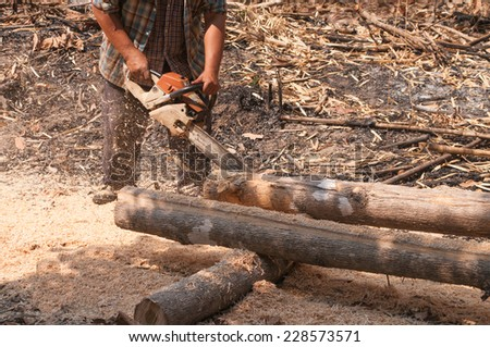 The worker trimming wood with chainsaw