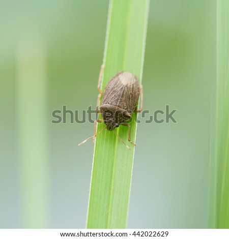 The world of insects - stock photo