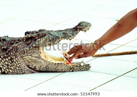 The world's largest crocodile farm in Koh Samui in Thailand - stock photo
