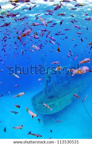 The Wreck of the Kittiwake with a Shoal of Blue Chromis - stock photo