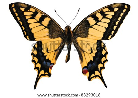 The yellow butterfly Papilio machaon of the family Papilionidae isolated on white background. - stock photo