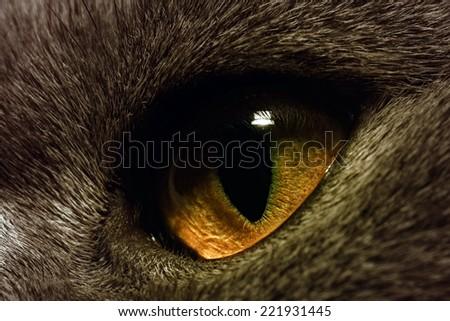 The yellow cat's eye extreme macro - stock photo