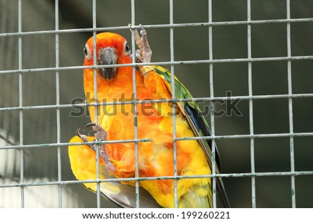 The Yellow parrot in a steel cage - stock photo