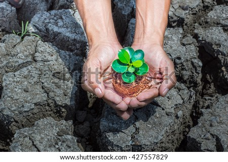 the yong sprout plants in old dirty hands,concept - stock photo