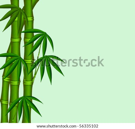 The Young bamboo on green background.