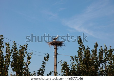 the young generation stork family on the nest - stock photo