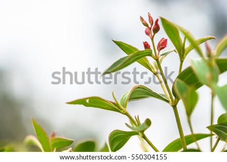 The young shoots of flowers in winter in a botanical garden with a green nature bokeh background.