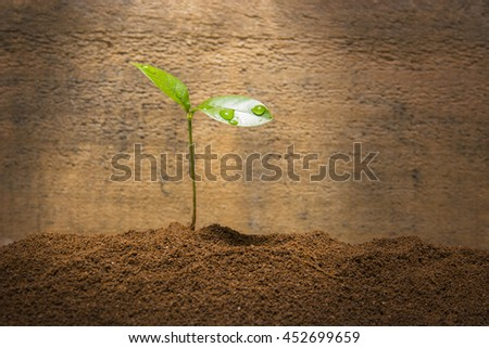 The young sprout under sunshine - stock photo