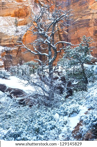 The Zion national park in Utah on winter - stock photo