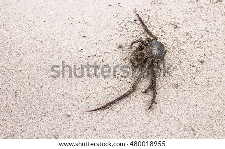 their carcass, crab, sand, motionless, Crab Ball, On sand