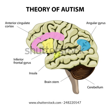 Theory autism human brain mirror neurons em ilustrao stock human brain and mirror neurons illustration show specific abnormalities in the ccuart Image collections