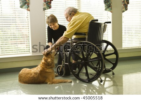 Therapy dog is pet by an elderly man in a wheelchair and a younger woman. Horizontal shot. - stock photo