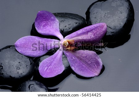 therapy stones and orchid flower with water drops - stock photo