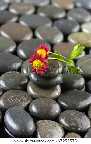 therapy stones with gerbera daisy on pebble