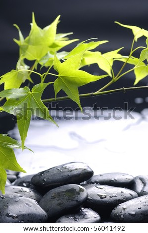 therapy stones with spring green leaves - stock photo