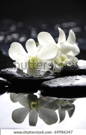 therapy stones with white orchid reflection - stock photo