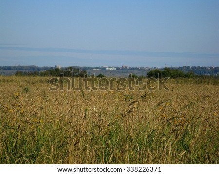 There are  field of yellow grass and tree - stock photo