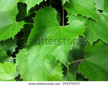 There  are green leaves and branches of a tree - stock photo