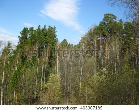 There are green trees and blue sky - stock photo