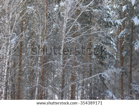 There are plants in snow. Winter forest - stock photo