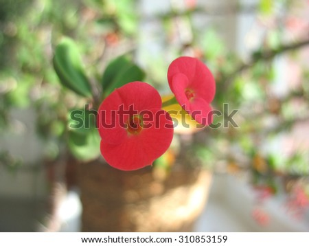 There are red flowers of begonia and green grass - stock photo