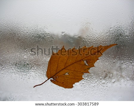 There are window glass, autumn leaf and rain drops - stock photo