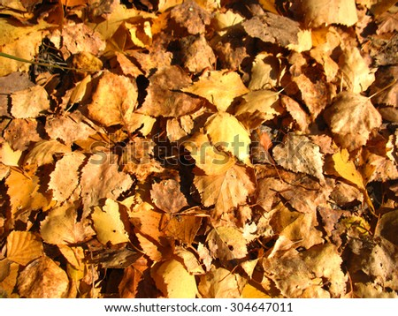 There are yellow autumn leaves and dry grass - stock photo