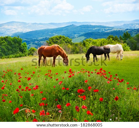 There horses grazing grass in the field with mountains on background and poppy fields on foreground - stock photo