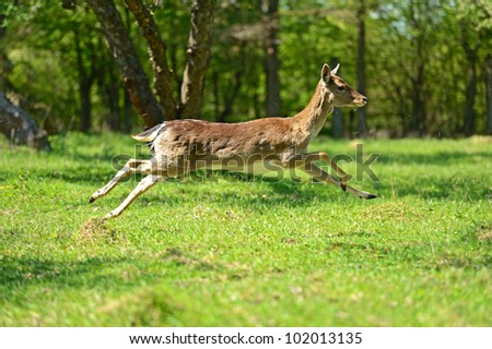 There is a deer in-field - stock photo