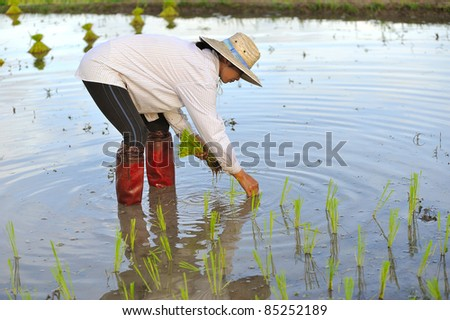 There is a farmer working in the farm. - stock photo