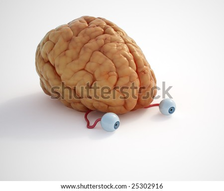 There's nothing to see .. it's just a brain. - stock photo