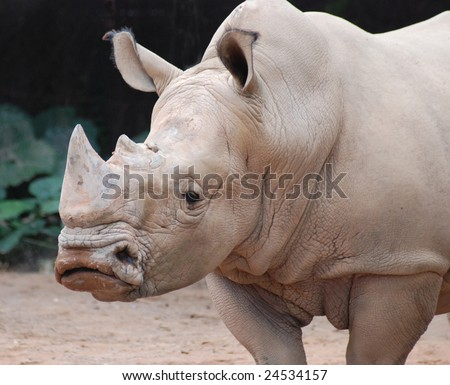 There was a rhino standing thereï¼?this is its headã??