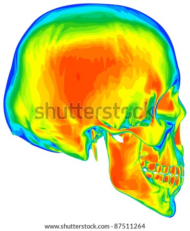 Thermal image of the human skull, isolated on white background. Bitmap copy my vector id  73544266 - stock photo