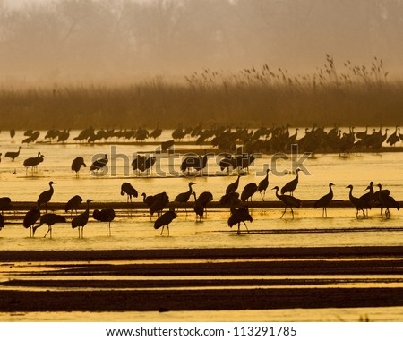 These cranes were found in Kearney Nebraska - stock photo
