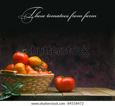These tomatoes from farm - stock photo