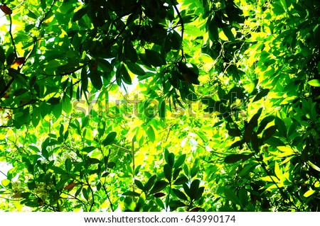 https://thumb7.shutterstock.com/display_pic_with_logo/167494286/643990174/stock-photo-they-are-green-leaves-643990174.jpg