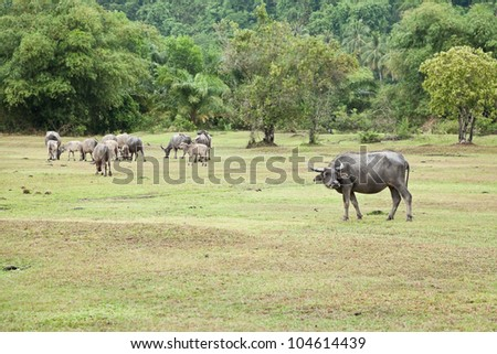 They are walking back home - stock photo