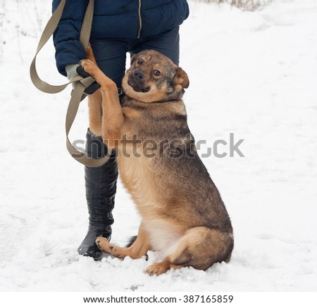 Thick brown mongrel dog sitting near man legs on white snow